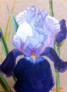 Iris Bleu ciel et bleu foncé 18 x 24