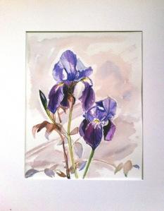 iris mauves 250115